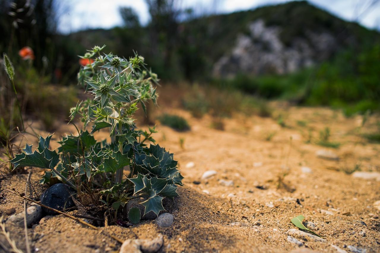 все растения на земле картинки казалось, что супруг