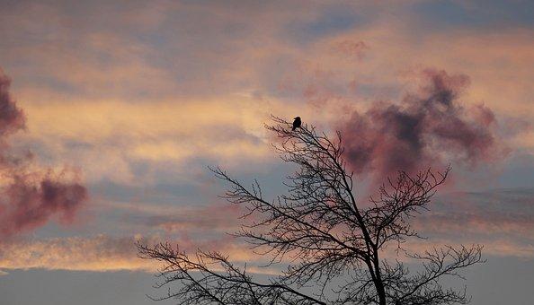 Tree, Dawn, Bird, Winter, Weather, Cold