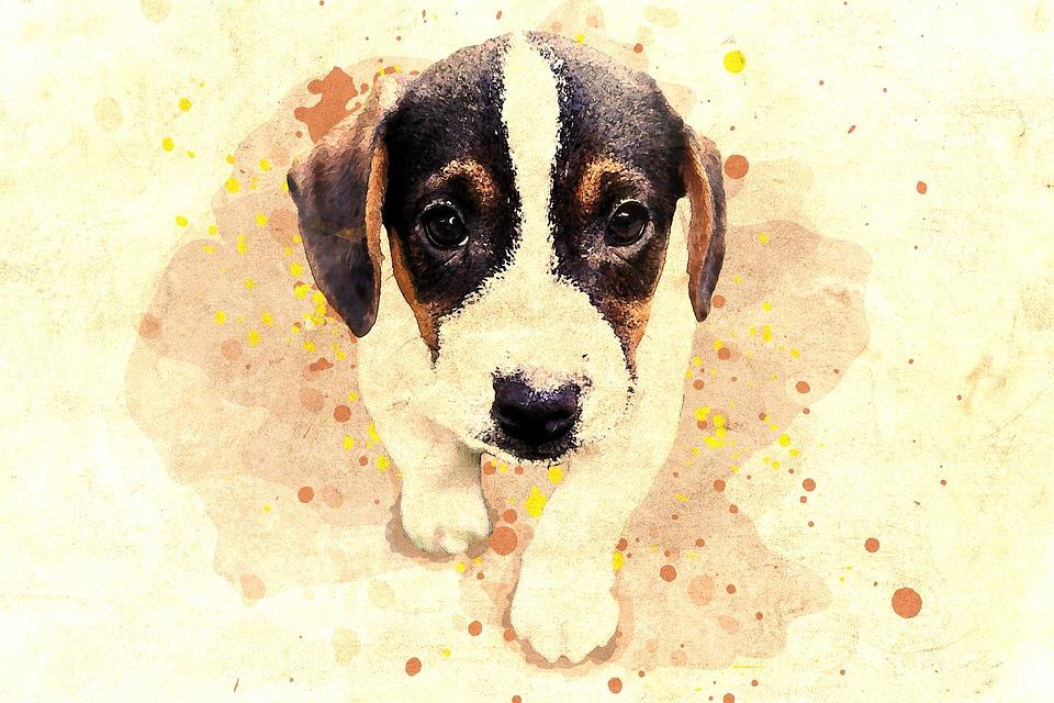 Hund Pet Søt Gratis bilde på Pixabay
