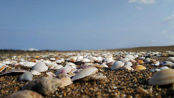自然, 風景, 空, 海, 浜辺, 海岸, 石, 砂, 貝, 貝殻