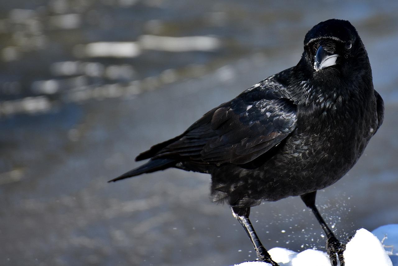 Ворона также несла послания из мира духа.