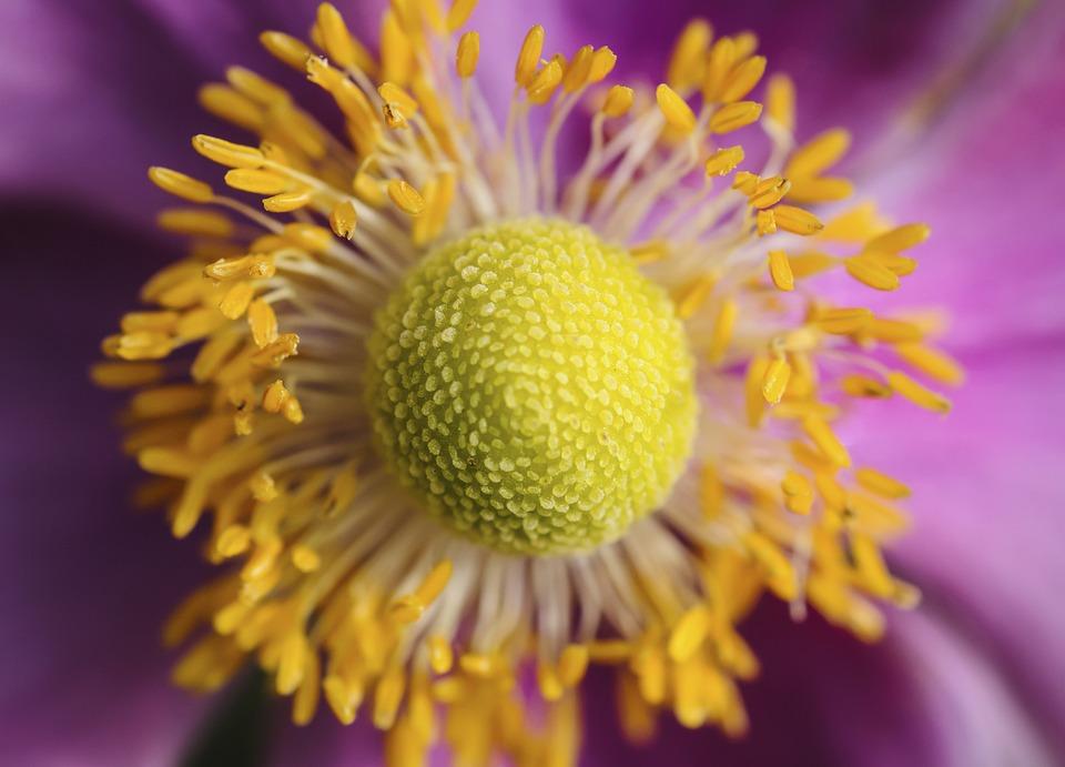 Bunga Alam Flora Daun Foto Gratis Di Pixabay
