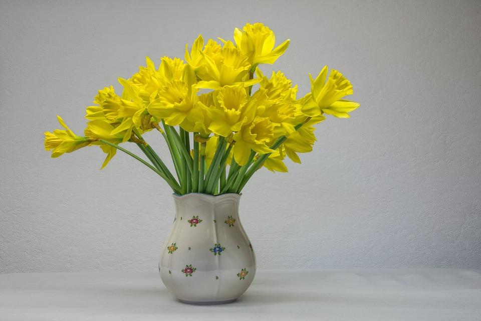 Osterglocken Narcise Floare - Fotografie gratuită pe Pixabay