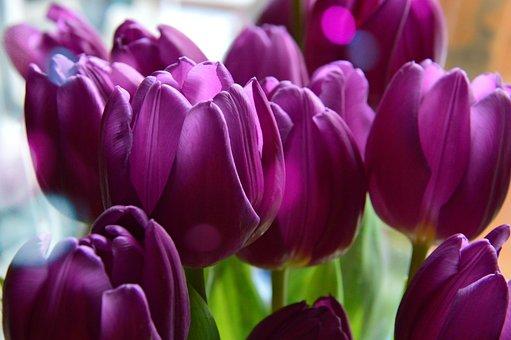 チューリップ, 自然, 工場, 花, 色, 活発な, 活気のある, 美しい