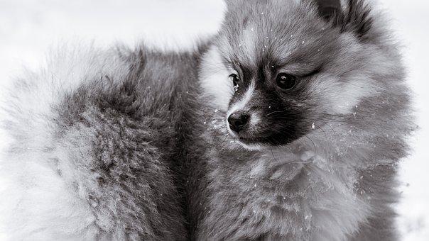 狗, 哺乳动物, 动物, 可爱, 宠物, 肖像, 自然, 照片, 户外, 搞笑