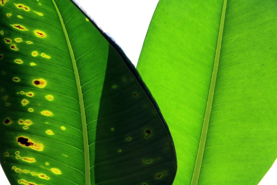 Plantas, Hoja, Principales, Naturaleza, Medio Ambiente