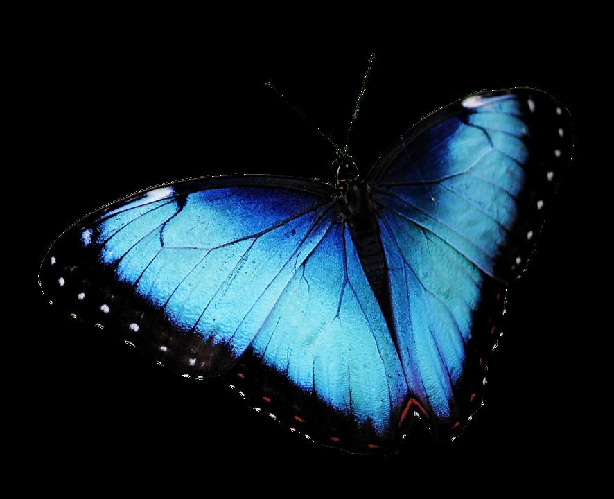 蝶 青い蝶 バタフライPng · Pixa...