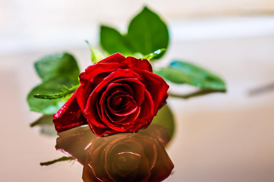 Rose Fleur Romantique Photo Gratuite Sur Pixabay