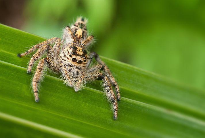 смотреть картинки виды пауков сайте собраны лучшие
