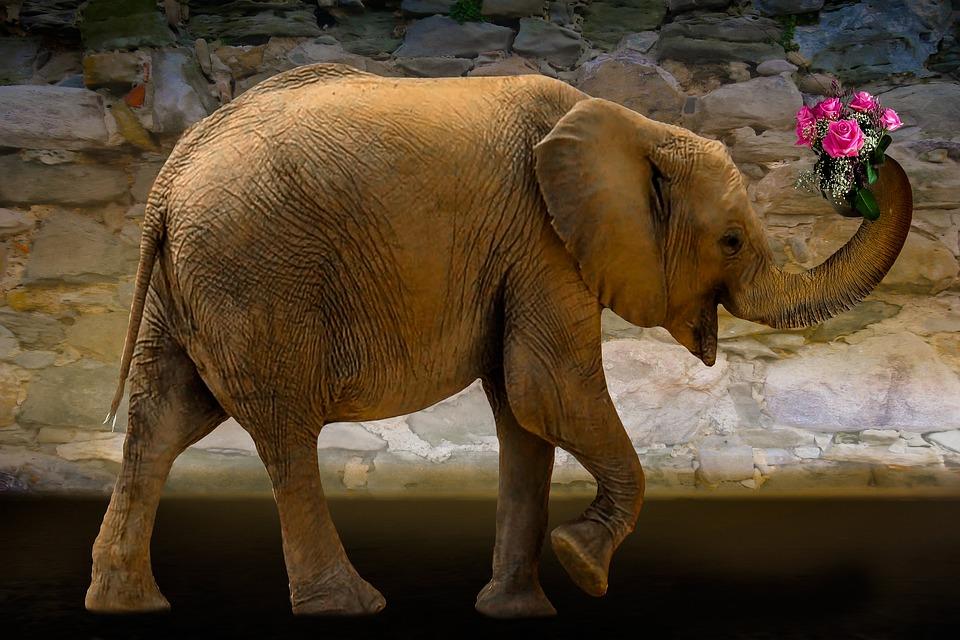 Tiere Natur Elefant · Kostenloses Foto auf Pixabay