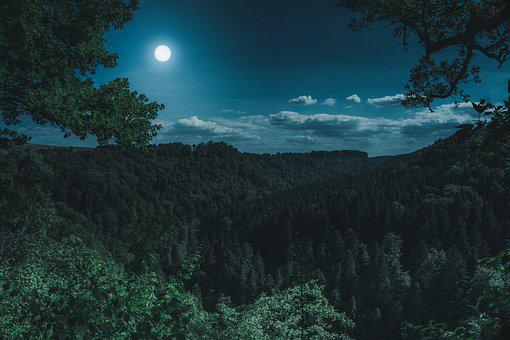 Nature, Forest, Landscape, At Night