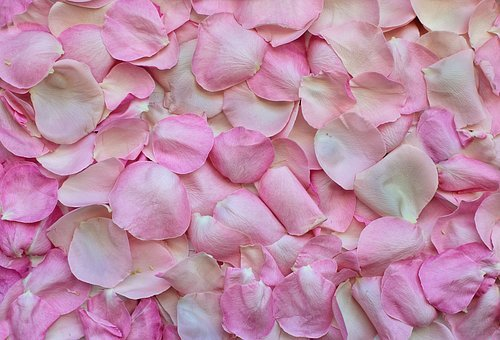 Rose Petals Pink Background Love