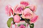 róże, kwiaty, kwiatowy