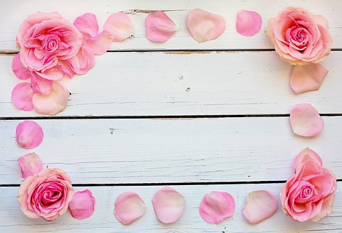 Flower, Rose, Petals, Pink, Text Space,Know more about the days leading up to Valentine's day like Rose Day, Chocolate day and Anti-Valentine's day like break up day, slap day and more.