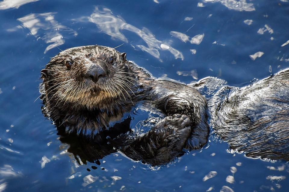 Características-de-los-animales-acuáticos
