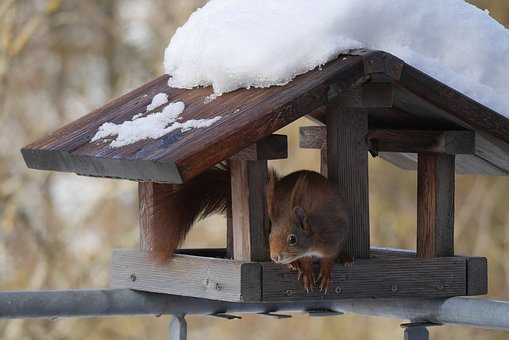 Aviary, Squirrel, Nature, Wood, Winter