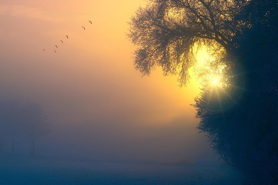 Nevoeiro, Amanhecer, Aves, Árvore, Estética, Pôr Do Sol