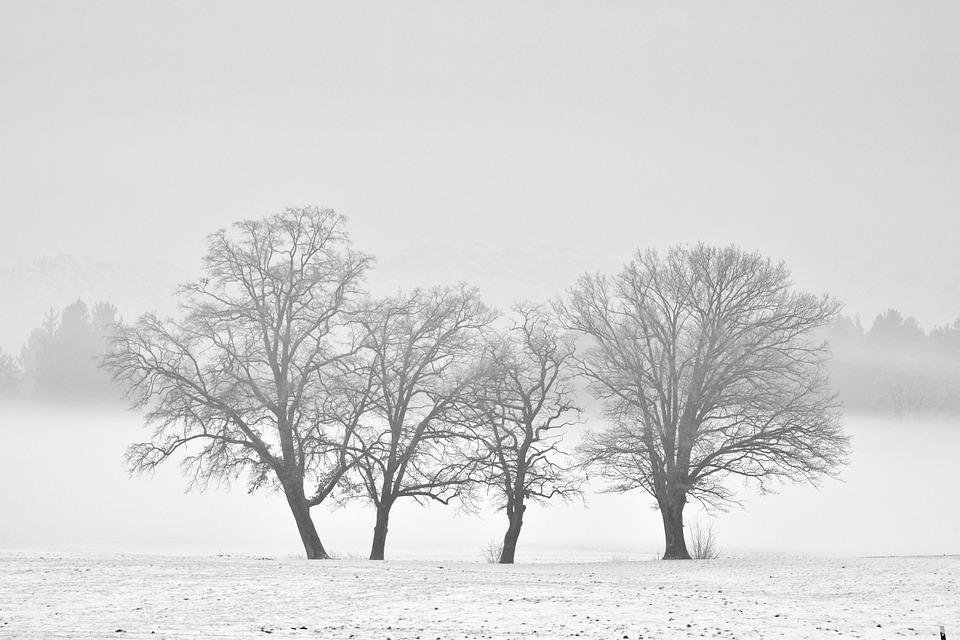 Inverno Bianco E Nero Neve Foto Gratis Su Pixabay