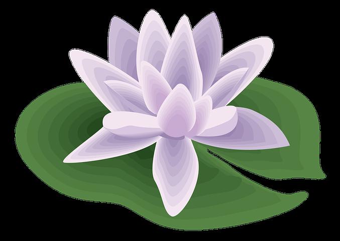 Цветок кувшинка картинка для детей