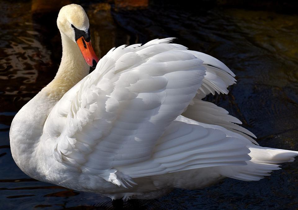 Лебедь в литературе