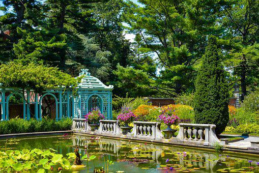 Garden, Park, Tree, Summer, Nature