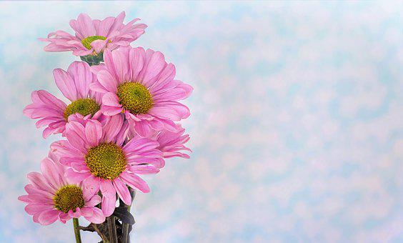 Text background images pixabay download free pictures daisies pink text space background mightylinksfo Gallery