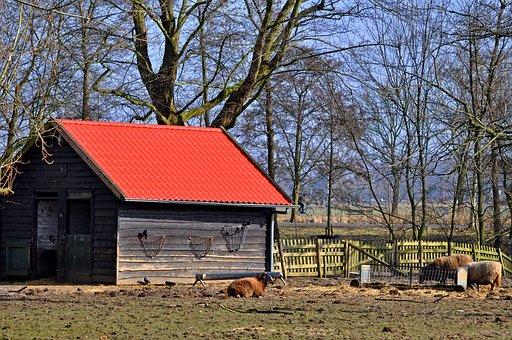 Barn, Shed, Paddock, Sheep, Livestock