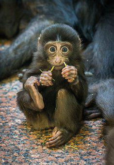 Monkey images pixabay download free pictures monkey primacy mammals living nature voltagebd Choice Image