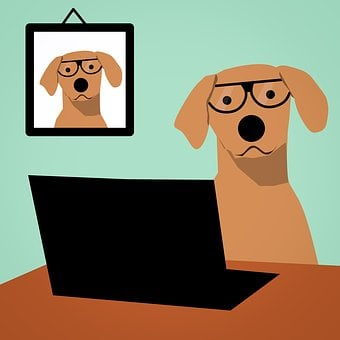 Dog, Laptop, Computer, Glasses