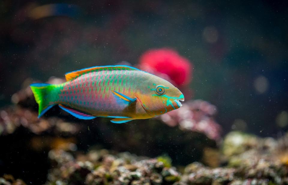 tipos de peixes de aquário