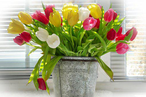 Tulip Bouquet Images Pixabay Download Free Pictures