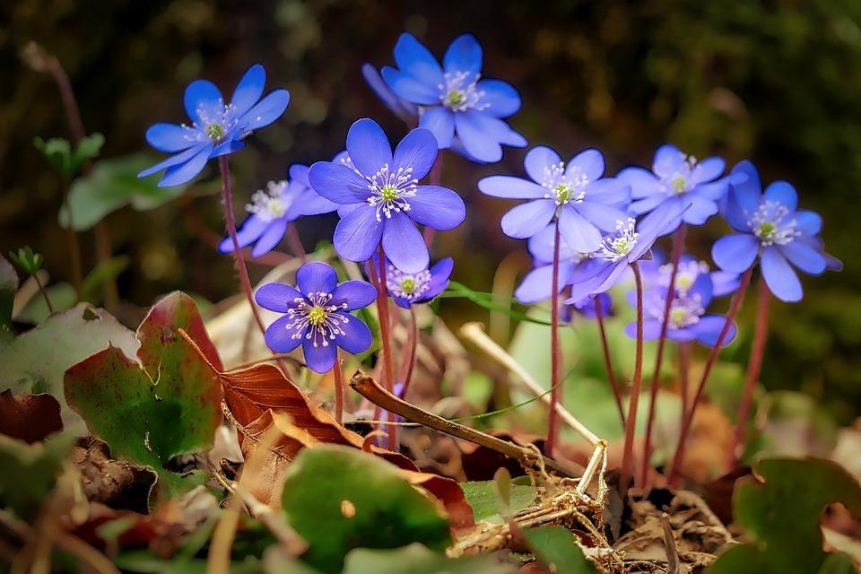Flower, Nature, Plant, Summer, Flowers, Floral, Color