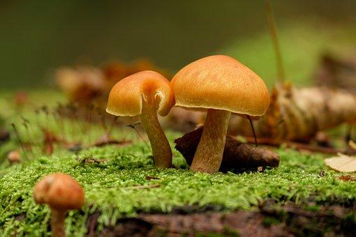 Mushrooms, Mushroom, Amanita, Nature