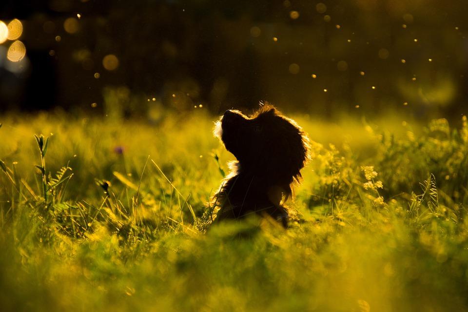 Gras, De Natuur, Hond, Silhouet, Puppy