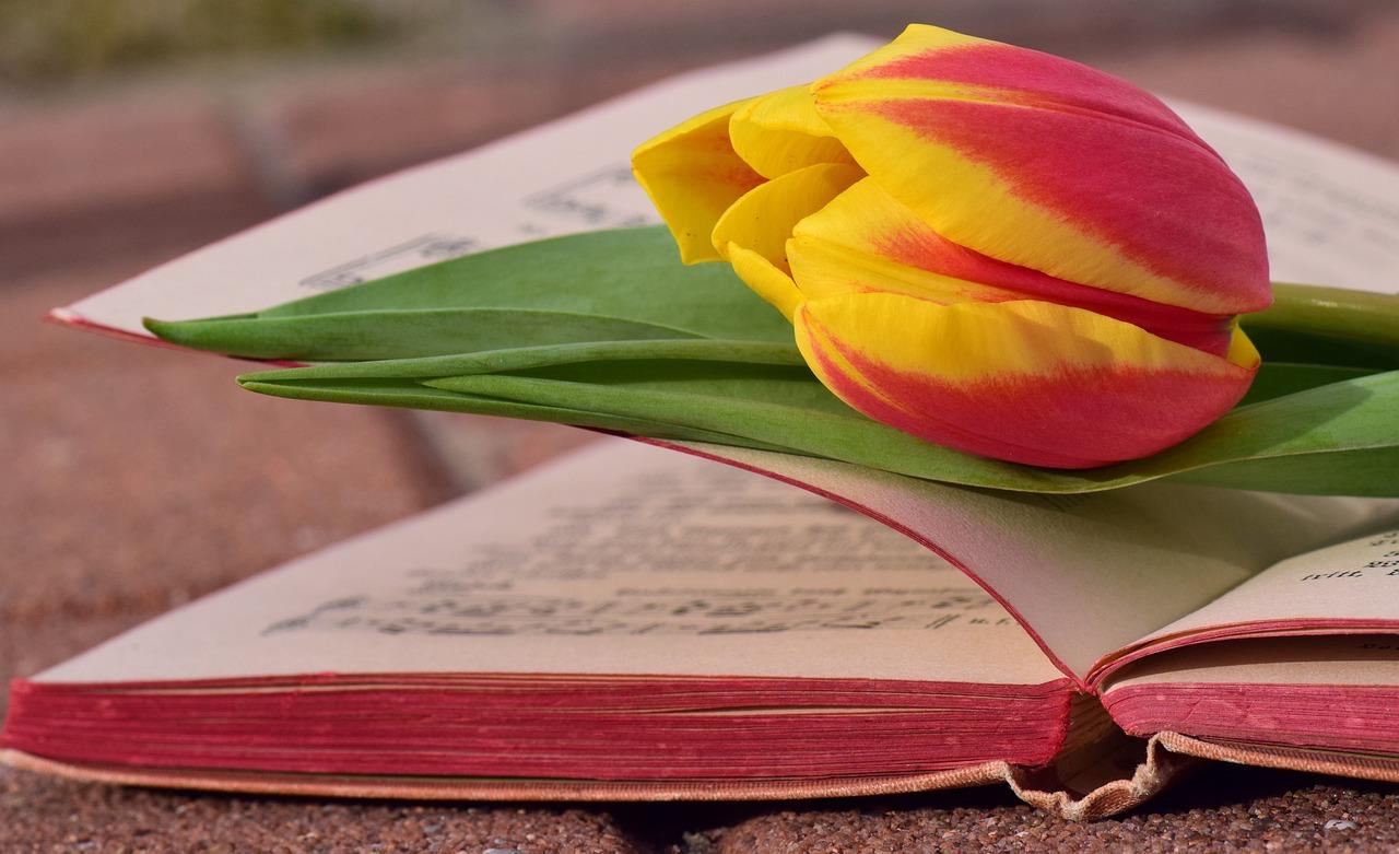 Картинка книги весной