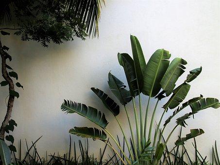Exóticos, Palmeras, Intervalo