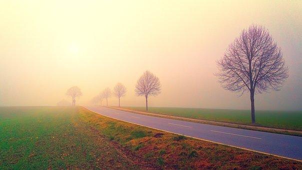 夜明け, 道路, 霧, 風景, 木, 自然, フィールド, 牧草地, 耕地, 朝