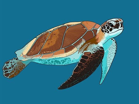 sea turtle images pixabay download free pictures