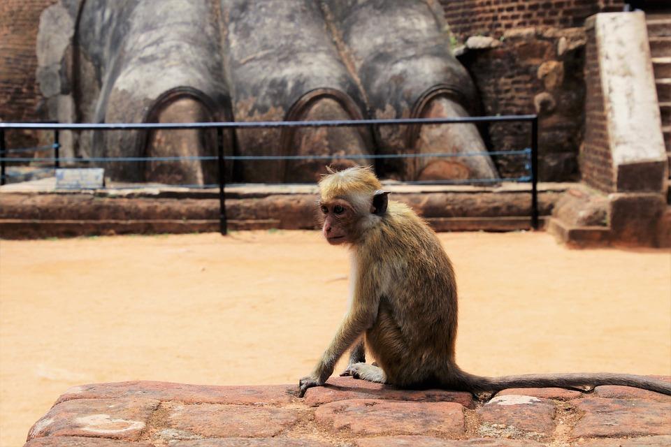 猴子, 动物, 野, 在法院的, 旅游, 岩, 公园, 石, 对象, 雕塑, 利爪