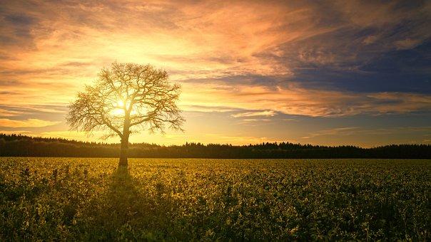 Sonnenuntergang, Baum, Feld, Sonne