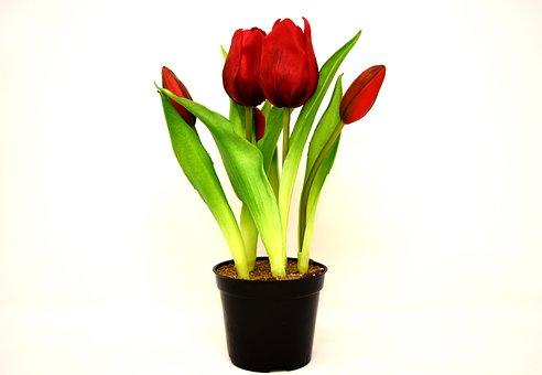 Más De 200 Imágenes Gratis De Flores Artificiales Y