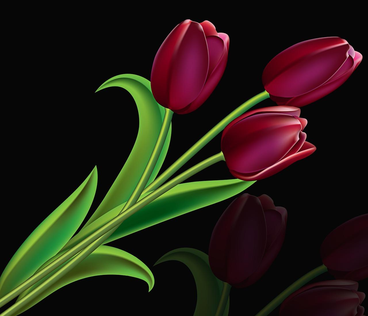 означает тюльпаны на темном фоне картинки ракет