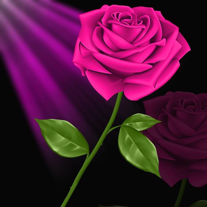 Bunga Cinta Tanaman Gambar Gratis Di Pixabay