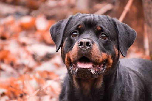 Dog, Portrait, Cute, Mammal, Animal