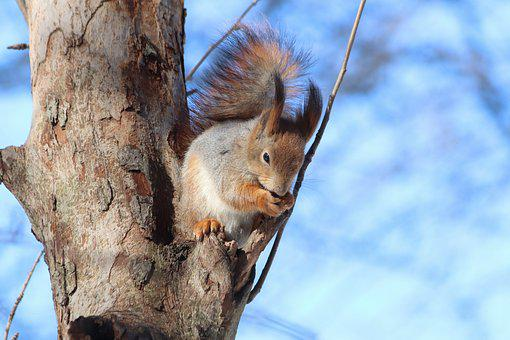 Luonne, Puu, Ulkona, Orava, Nisäkkäät