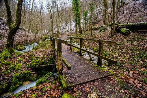 Bois, Nature, Arbre, Chemin D'Accès