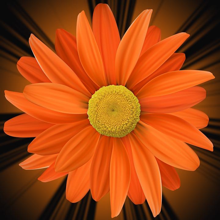 color petal flower orange free photo on pixabay