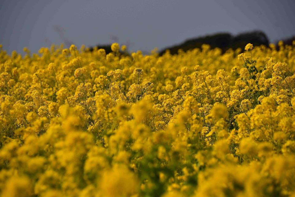 Bidang Pertanian Perusahaan Foto Gratis Di Pixabay