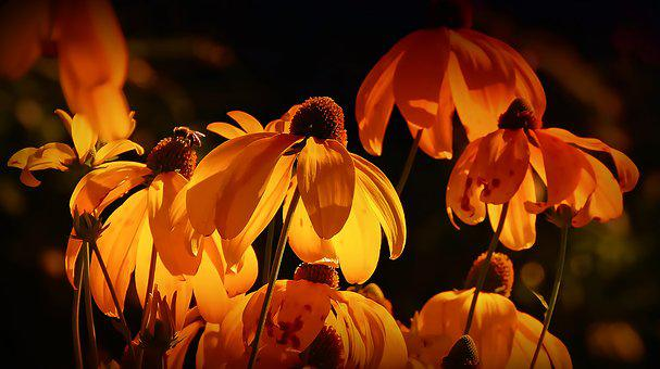 Yellow flowers images pixabay download free pictures flowers orange orange petals mightylinksfo