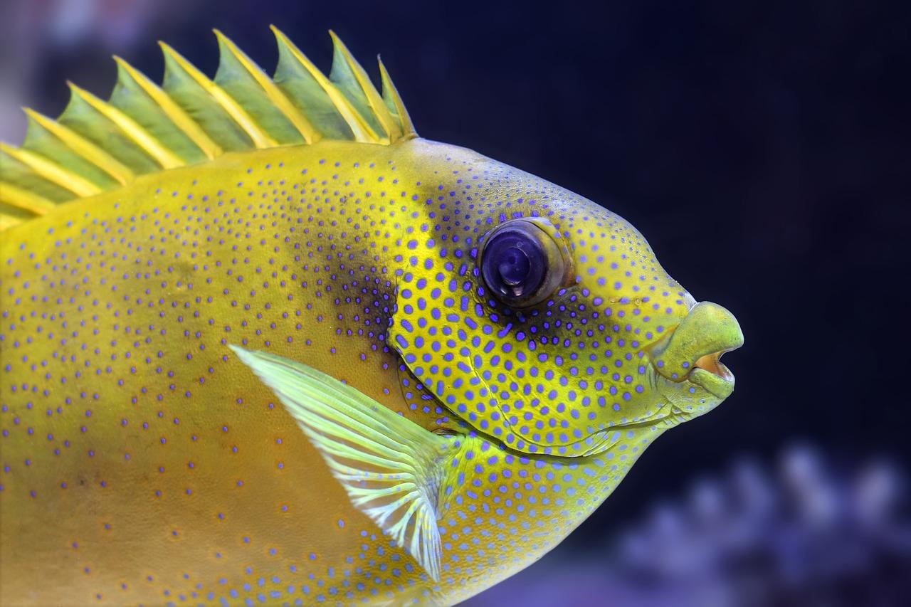 Плавники рыбок картинки